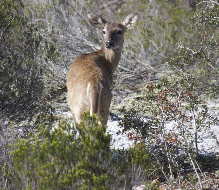 Learn about animals in the wild at Grayton Beach State Park