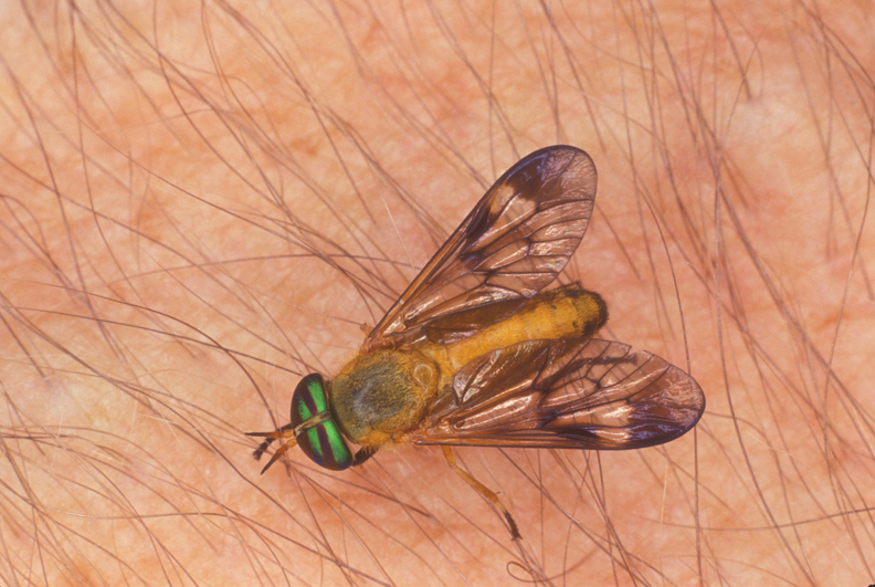 Yellow Flies Are Back Walton Outdoors